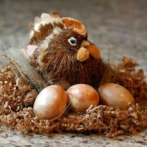 Гнездо курицы